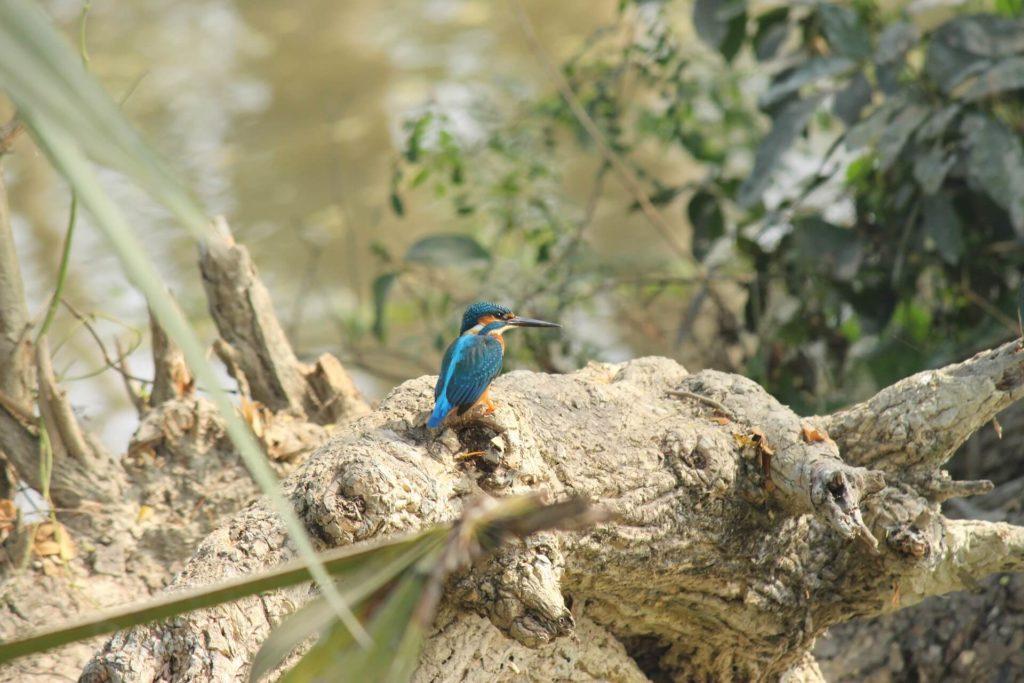 La faune de l'Herault est admirable en canoë